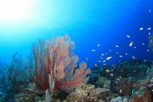 八王子市みなみ野のダイビングサービス エアクルーズスキューバダイビングブログ エアクルーズ 伊豆海洋公園IOP