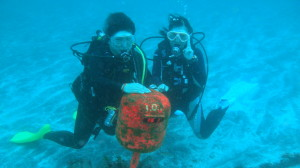 エアクルーズ IOP伊豆海洋公園ダイビング