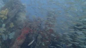 熱海ダイビング 沈船 エアクルーズスキューバダイビング